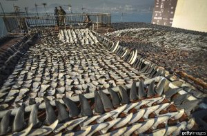 Shark Fins by Getty Images